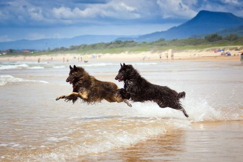 flying beach dogs