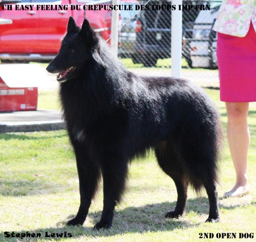 2nd Open dog Gron